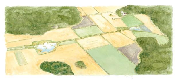Varierande och mångsidigt fältlandskap, i vars mitt en våtmark.