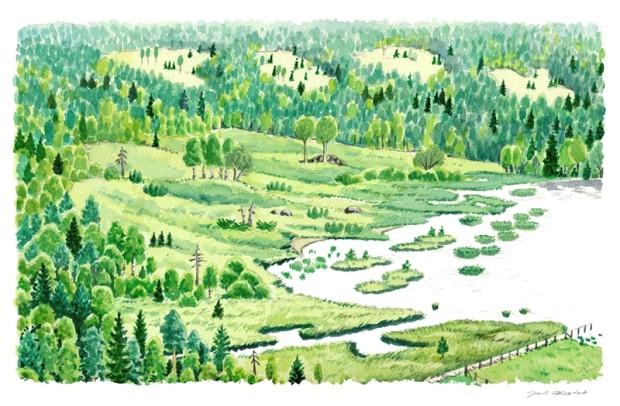 """Metsän ja lammen välinen vaihettumisvyöhyke. Yksityiskohta keskiaukeamakuvasta """"Riistaa reunoilta"""" oppaaseen. Akvarelli 32x21cm300ppi. © Jari Kostet 2014."""