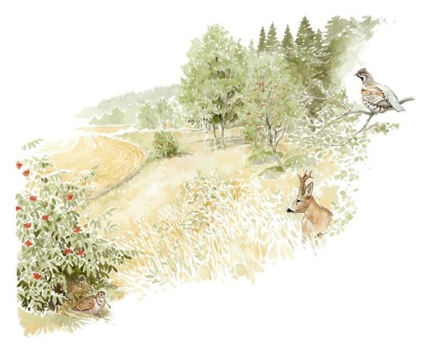 Vid skötseln av kantzonen mellan åkern och skogen är det meningen att skapa en kantzon med övervägande buskar och lövträd som erbjuder både skydd och föda och även en halvöppen livsmiljö för olika arters behov. Odlaren har också nytta av åtgärden, för då luften rör sig och solljuset ökar torkar åkern snabbare, vilket förbättrar både odlingsmöjligheterna och skörden och leder till att skörden mognar samtidigt på hela åkern.