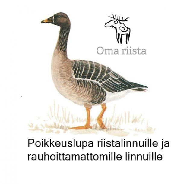 Metsähanhi ja Oma riista logo