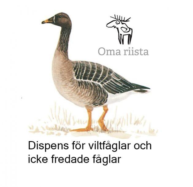 sädgås och Oma riista logo
