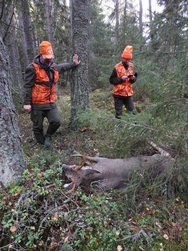 Kaksi metsästäjää seisoo valkohäntäpeurakaadon luona.