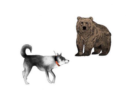 Piirroskuva karhukoirasta ja karhusta.