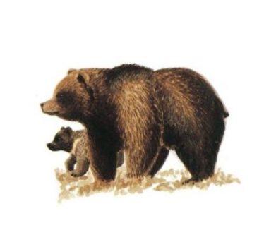 Poikkeuslupa karhu, kannanhoidollinen