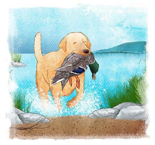 Piirroskuva noutajasta nousemassa vedestä rantaan sinisorsa suussaan.