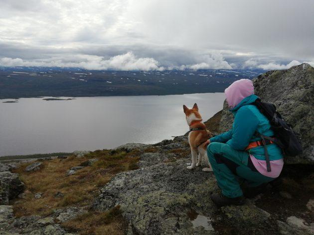 Koira ja retkeilijä katsomassa maisemaa tunturilla.